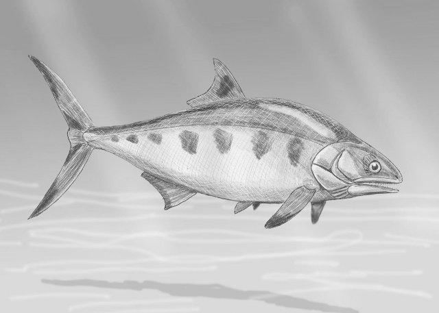 Rekonstruktionszeichnung von Hypsocormus sp.  Bild ©