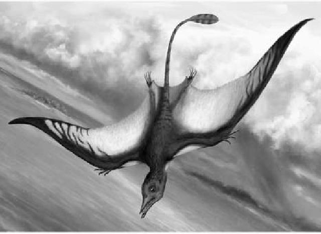 Rekonstruktionszeichnung von Bellubrunnus rothgaengeri HONE ET AL. Bild ©