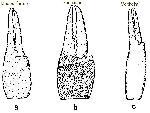 Rekonstruktionszeichnung Eryma punctatum