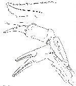 Rekonstruktionszeichnung Harthofia blumenbergi