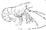 Rekonstruktionszeichnung Bylginella haeberleini