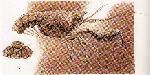 Rekonstruktionszeichnung Glyphea squamoso