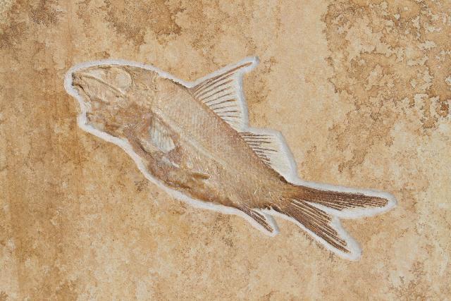 Propterus microstomus Bild ©