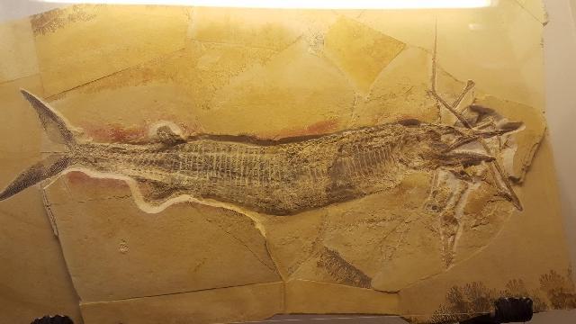 Aspidorhynchus mit Rhamphorhynchus   Bild ©