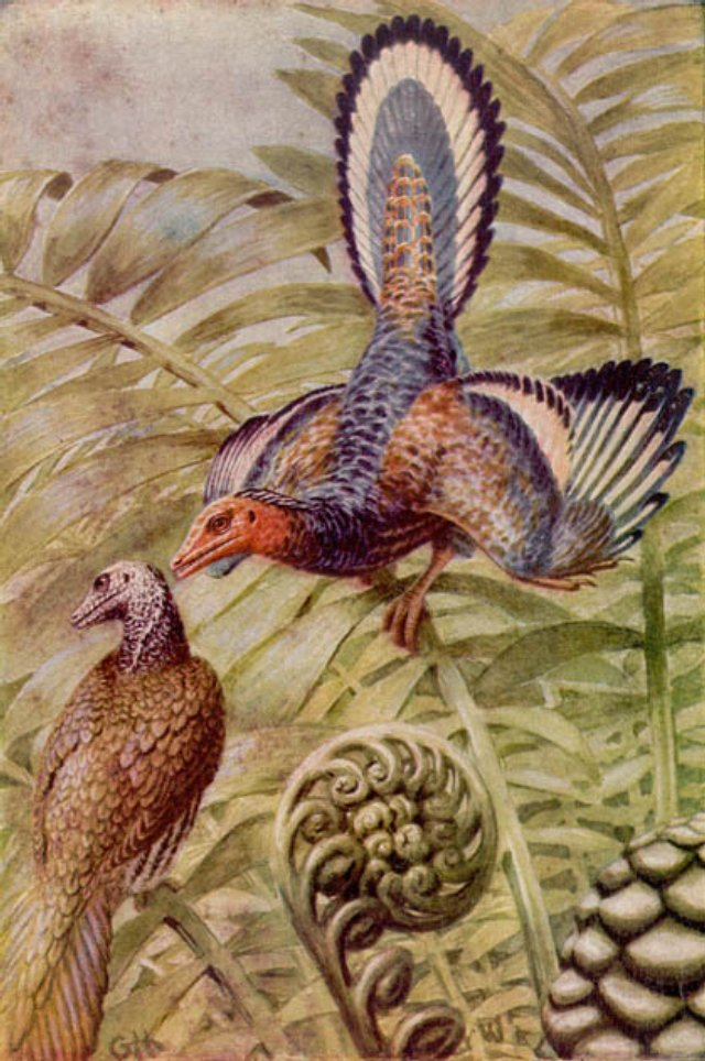 Archaeopteryx lithographica Bild ©