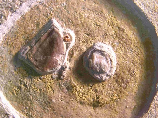 Ammonit mit Nierenstein   Bild ©