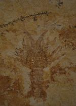 Palinurina longipes