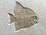 Turbomesodon