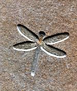 Tarsophlebia eximia