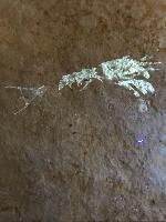 Krebslarve larve eines hummerartigen krebses
