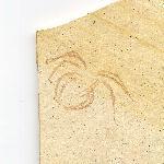 Häutungen (Exuvien)