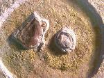 Ammonit mit Nierenstein